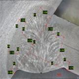 焊接熔深检测图